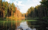 priroda-melenkovskogo-raiona-008