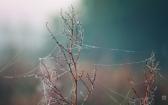 priroda-melenkovskogo-raiona-013