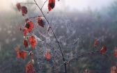 priroda-melenkovskogo-raiona-021
