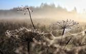 priroda-melenkovskogo-raiona-022