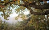 priroda-melenkovskogo-raiona-044