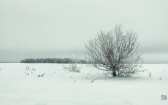priroda-melenkovskogo-raiona-051
