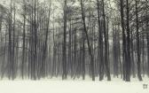priroda-melenkovskogo-raiona-060