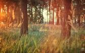 priroda-melenkovskogo-raiona-075