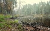priroda-melenkovskogo-raiona-082
