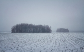 priroda-melenkovskogo-raiona-085