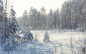 priroda-melenkovskogo-raiona-097