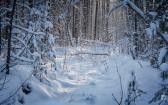 priroda-melenkovskogo-raiona-098