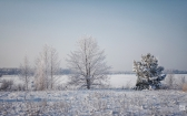 priroda-melenkovskogo-raiona-099