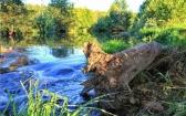 priroda-melenkovskogo-raiona-103