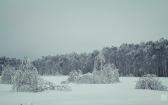 priroda-melenkovskogo-raiona-112