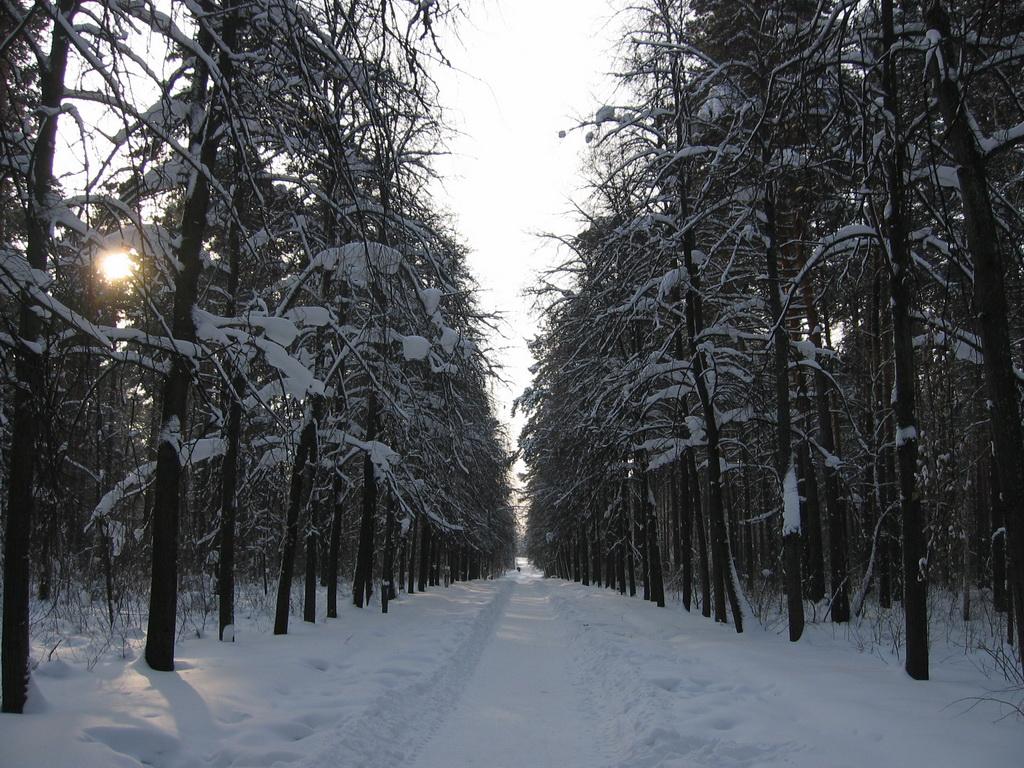 Зима. Аллея Ермакова