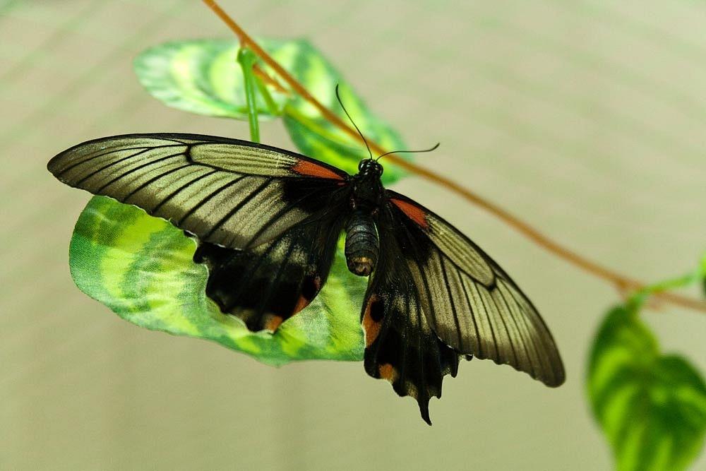Выставка бабочек в Муроме