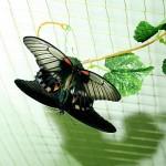 Выставка бабочек в Муроме. Достопримечательности Мурома