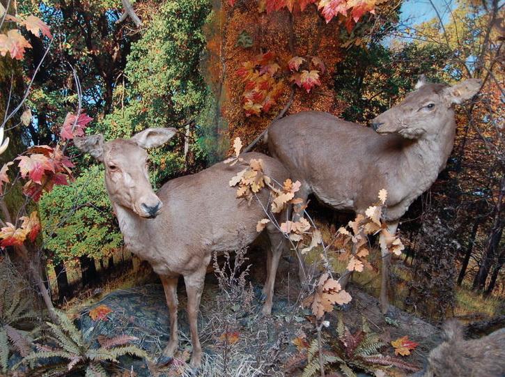 Музей природы во Владимире. Экспозиция