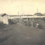 Посадка хвойных деревьев на валу  (Юрьев-Польский)