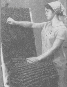 Искусственный каракуль—продукция завода «Искождеталь»
