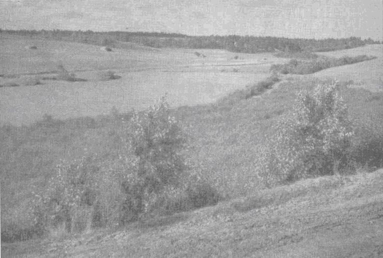 Чарует взор древнее владимирское ополье, плодороднейшая земля, известная уже более восьми веков. На фото Г. Шлионского — ополье