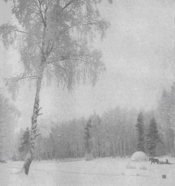 Зима (снято В. Боченковым в Камешковском районе Владимирской области)