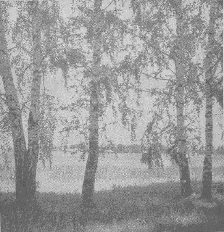 Лето (снято В. Боченковым близ станции Корякино Владимирской области)