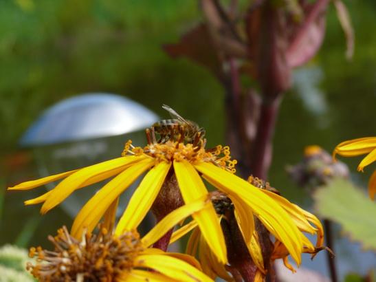 Пчеловодство во Владимирской области