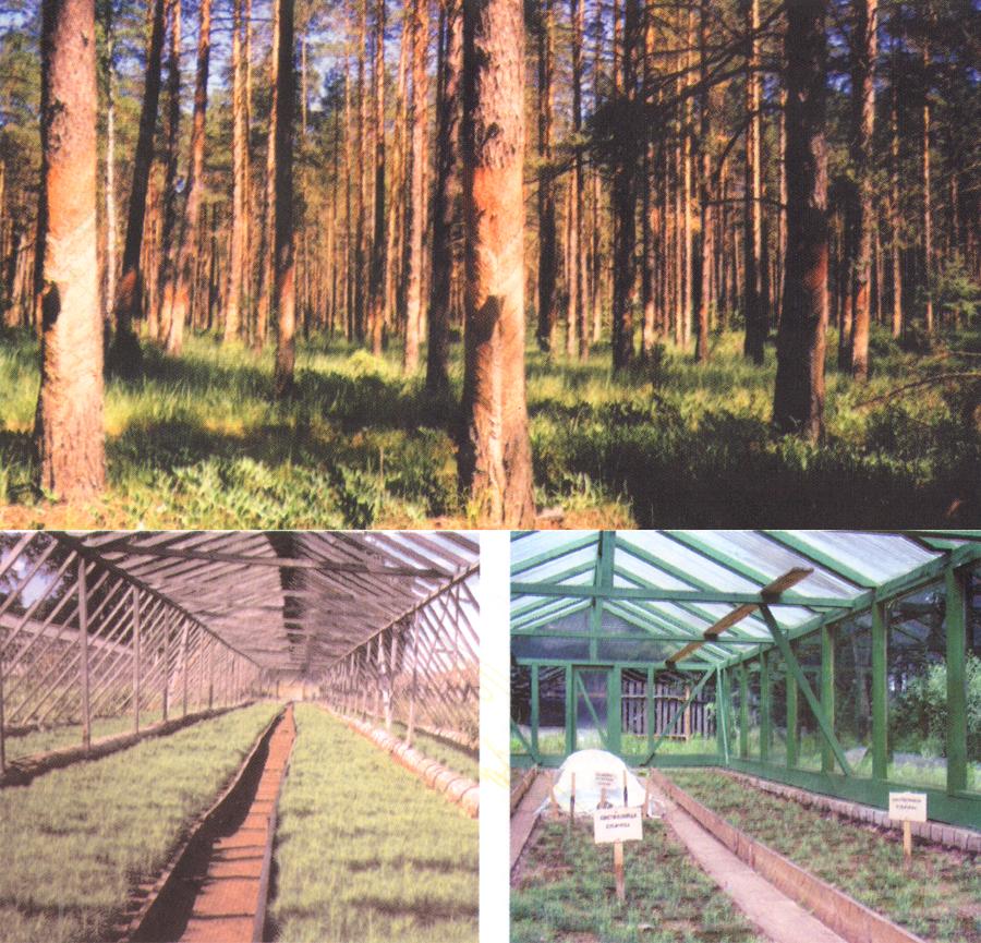 Гордость лесхоза - теплицы для саженцев