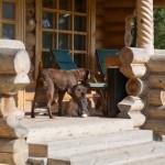 База отдыха Мещерский скит - сторожевые псы