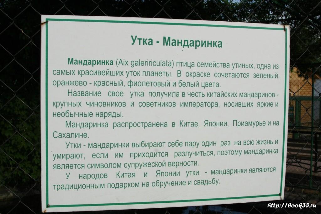 Спасо-Преображенский монастырь Мурома. Об утках-мандаринках