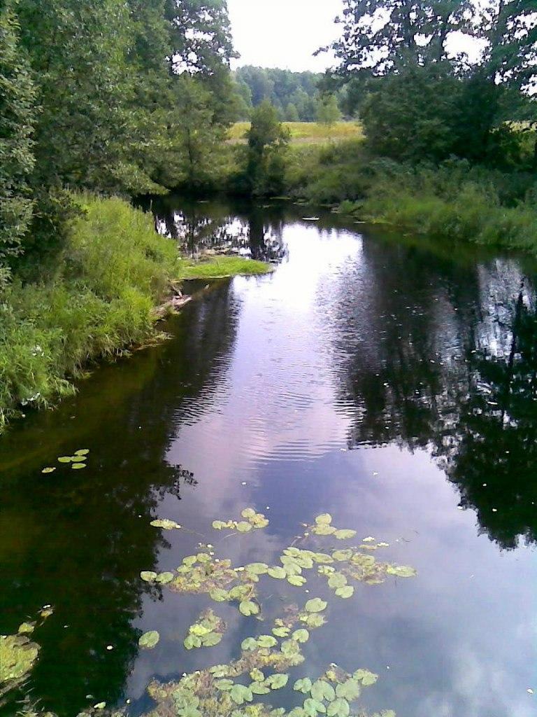 Вязниковский район. река Тетрух у бывшего села Городищи. Вязниковский район 02