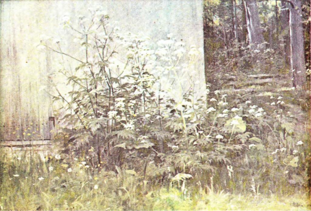 """И.И. Шишкин - """"Цветы у забора"""""""