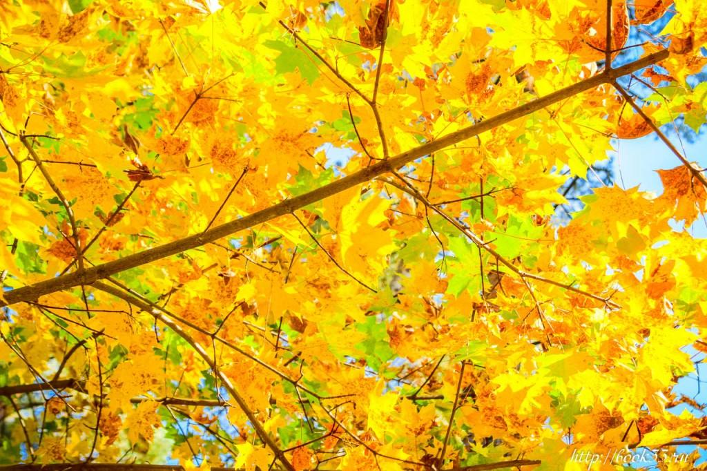 7581 Теплая Осень на Вербовском