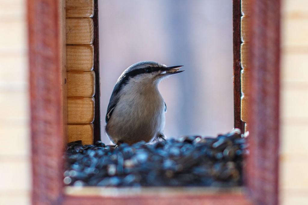 Птицы в Лесном парке Дружба 02
