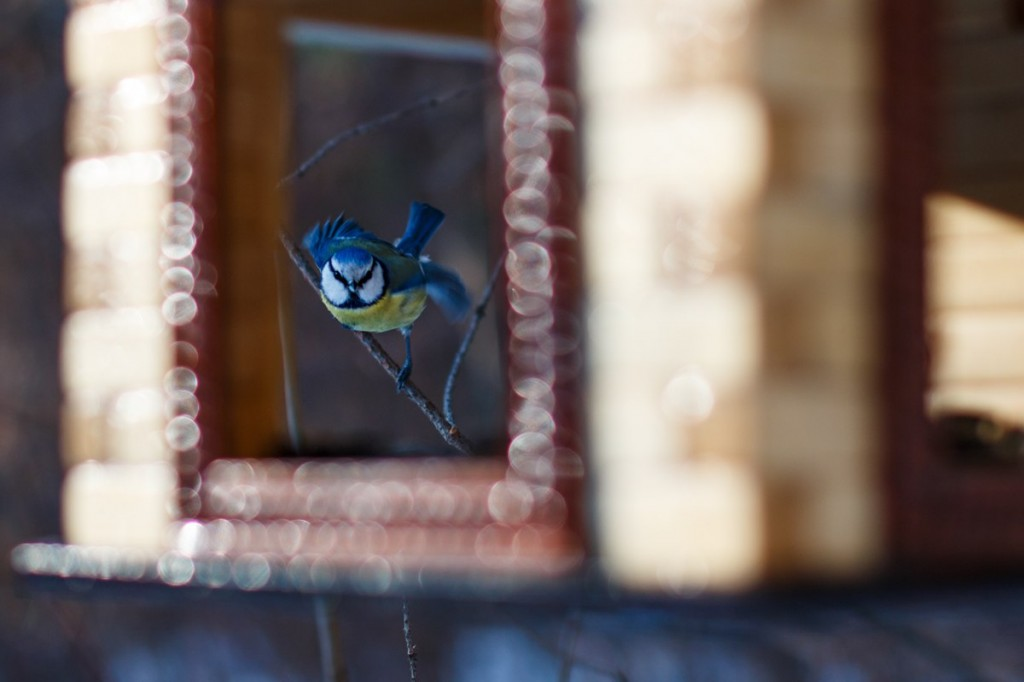Птицы в Лесном парке Дружба 05