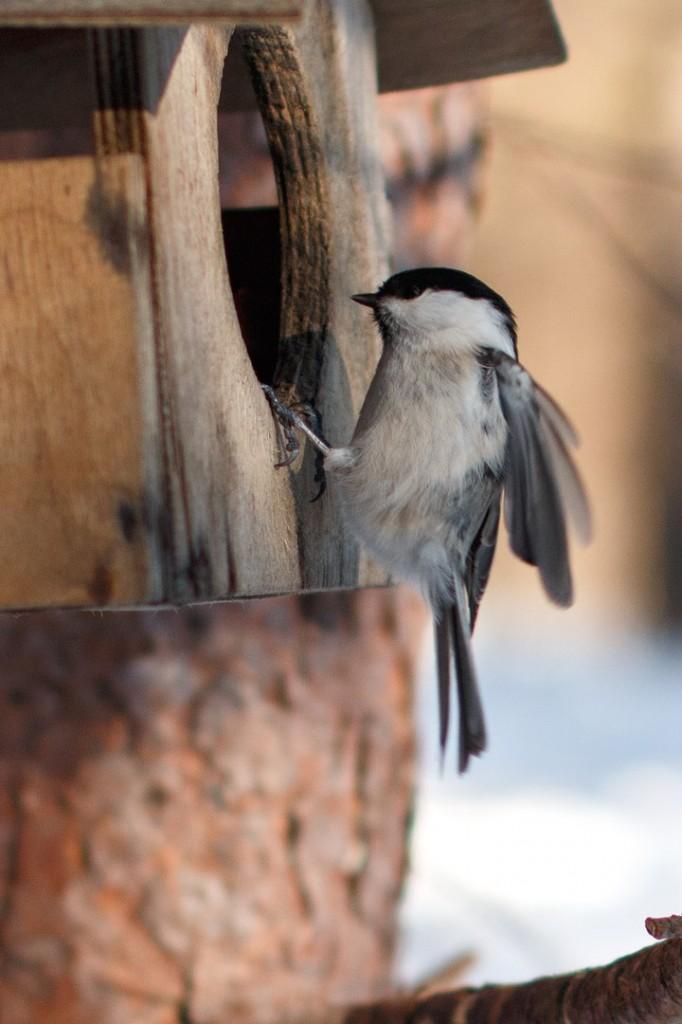 Птицы в Лесном парке Дружба 06