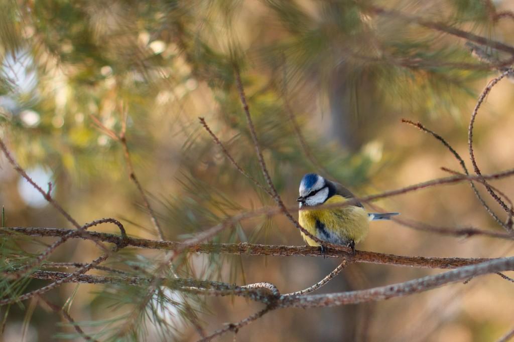 Птицы в Лесном парке Дружба 10