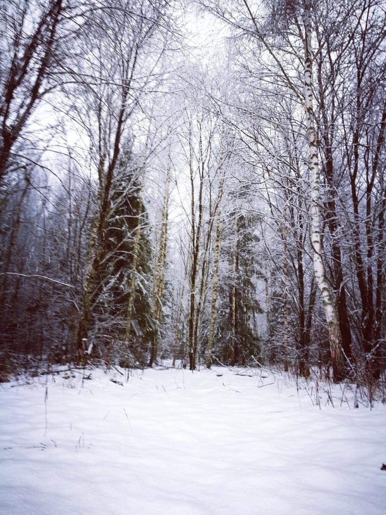 Деревня Перематкино, Александровский район 03