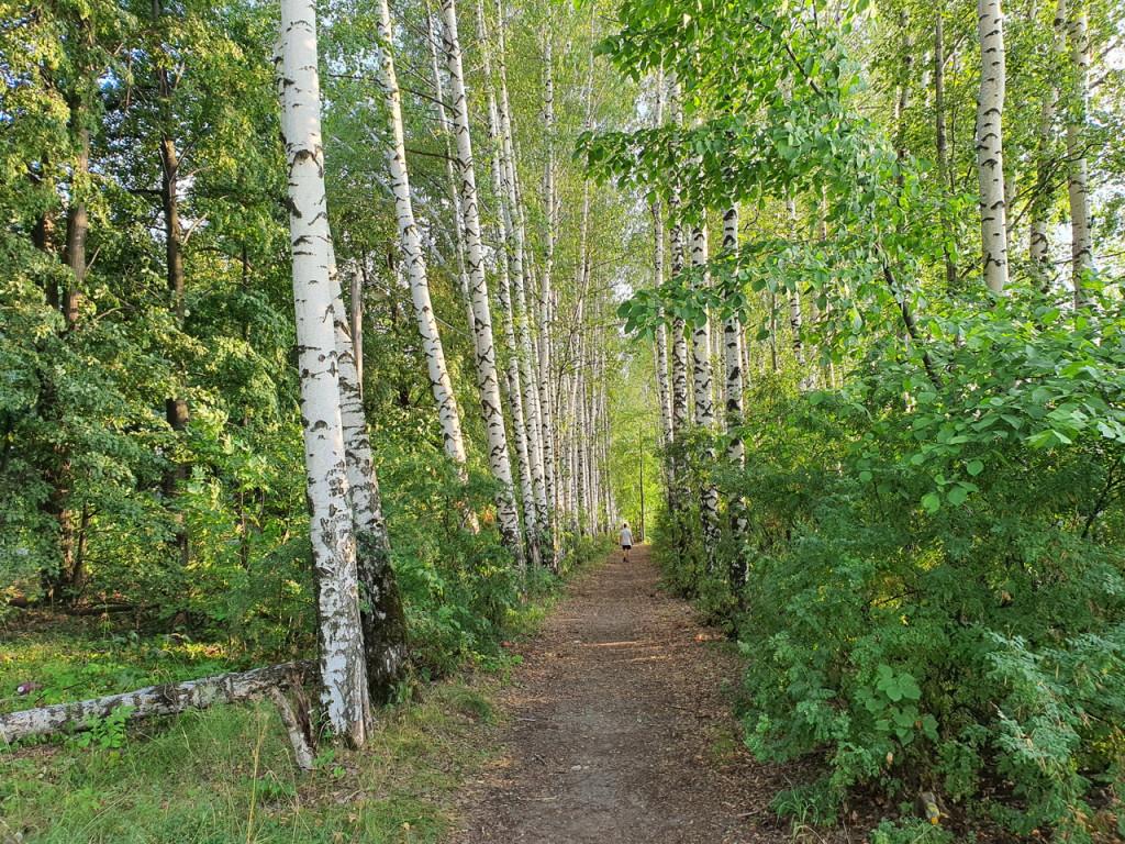 Дорога для пешеходов Вербовский - Муром